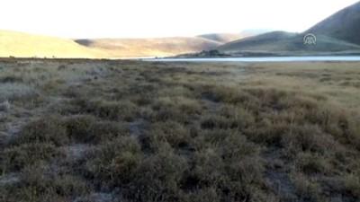 Kuruyan Meke Gölü'nün üstünü yabani otlar kapladı - KONYA