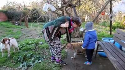 sokak kopegi -  40 yıllık hayvan sevgisini evinin bahçesine taşıdı Haberi