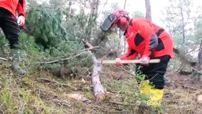 Çalıştığı ormanda Türkiye'nin ilk 'sertifikalı kadın orman üretim işçisi' oldu - SAKARYA