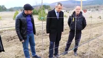 girisimcilik -  Atıl vaziyetteki araziyi alıp kentin en büyük elma tarlasına dönüştürdü