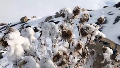 Kış zorlukları ve güzelliğiyle yaşanıyor - IĞDIR