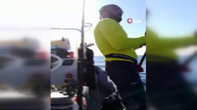 Adana'da amatör balıkçıların oltasına köpek balığı takıldı