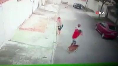 - Küçük çocuğu pitbull saldırısından kurtaran genç kahraman ilan edildi