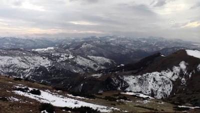 Çetin kış şartlarının yaşandığı Tunceli'de yılkı atlarının yem bulma mücadelesi - TUNCELİ