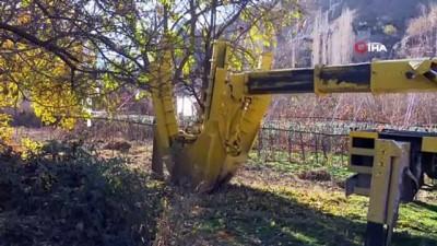 Yeni Yusufeli'ne ilk meyve ağaçları taşındı