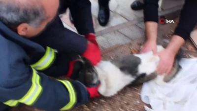 Boğazı zincire dolanan köpeğin imdadına itfaiye yetişti