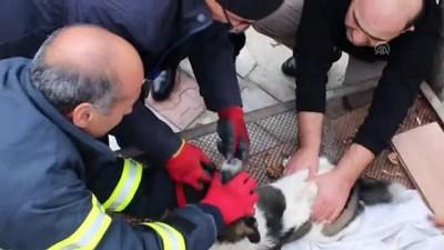 İtfaiye ekipleri kafasına zincir dolanan köpek için seferber oldu - ERZİNCAN