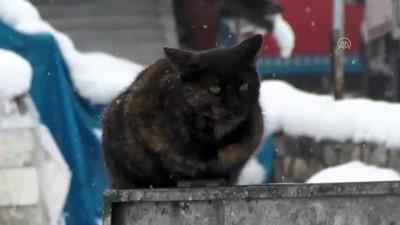 Ovacık'ta kar yağışı hayatı olumsuz etkiledi - TUNCELİ