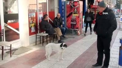 sokak kopegi -  Vefakar köpek vefat eden sahibini 6 aydır bekliyor
