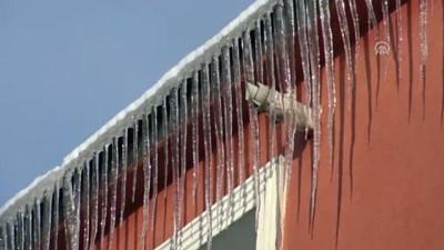Doğu'da kar yağışı ve soğuk hava etkili oluyor - Yiyecek arayan tilki - KARS