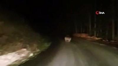 ormana -  Kış uykusuna yatamayan ayı yola indi
