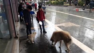 sokak kopegi -  Kızıltepeli çocuk yiyeceğini sokak köpeği ile paylaştı