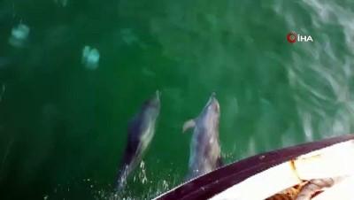 Yunuslar balıkçılarla yarıştı