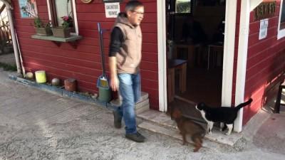 Sokak kedisi ile yavru köpeklerin şaşırtan dostluğu - KASTAMONU