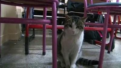 Bu da liseli kedi