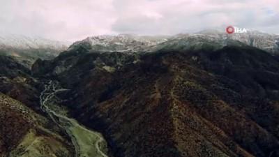 Karlı dağlardaki yaban keçileri havadan görüntülendi