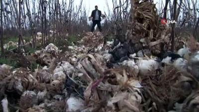Komisyoncular 'bugün git yarın gel' dedi, tonlarca sarımsak çöpe gitti