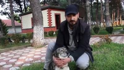 Annesiz kalan köpekler için 'süt seferi' yapıyor - ORDU