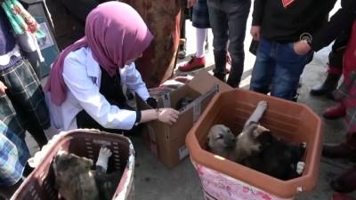 Köpek yavrularına öğrenciler ve öğretmenleri sahip çıktı - İZMİR