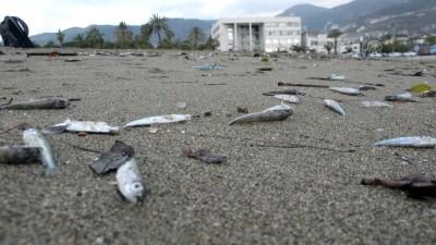 Sahile çok sayıda ölü balık vurdu - ANTALYA