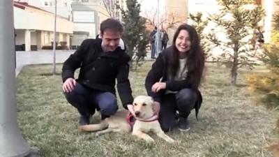 Kazazede köpek 'Kuki' yürüteçle hayata tutundu - KAYSERİ