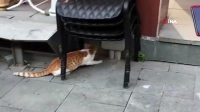 Sokak kedisi fareyle böyle oynadı
