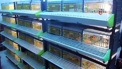 kinali -  Kınalı keklikler doğanın korunmasına yardımcı oluyor