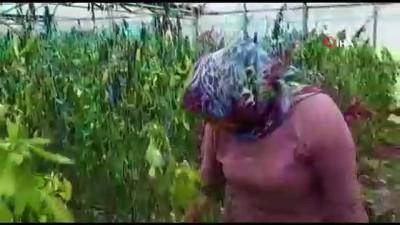 Fırtına sonrası çiftçi kadınların yüksek fiyat isyanı