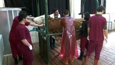 - Her ay bin hayvan 55 kişilik ekibin sayesinde şifa buluyor