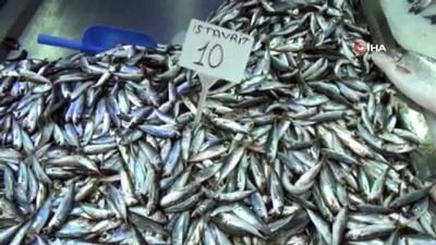 Sinop'ta istavritin kilosu 10 liraya düştü