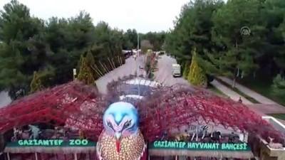 Gaziantep Hayvanat Bahçesi'nin müzmin bekarlarına eş aranıyor