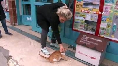 Fenomen kedi, market çalışanları tarafından sahiplenildi
