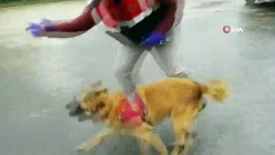 uyusturucu madde -  Jandarma köpeği 'Atak'tan zehir tacirlerine darbe