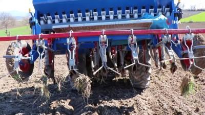 Sezonun ilk kenevirleri ekilmeye başlandı...Ekim çalışmaları havadan görüntülendi