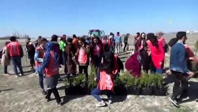 Karapınar'da 300 fidan toprakla buluştu - KONYA