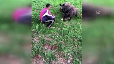 Aç kalan yavru yaban domuzları ekmekle besledi - MUĞLA