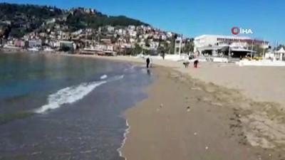 Ölü denizanaları sahile vurdu