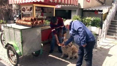 İzmir gevreği sevdalısı köpek 'Daisy'...Her gün gevrekçiye gidip karnını doyuruyor