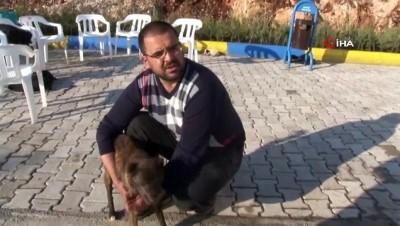 Mardin'de köpeğe katarakt ameliyatı yaptılar