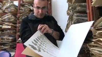 arastirma merkezi - Yeni bitki türü bulundu - İZMİR