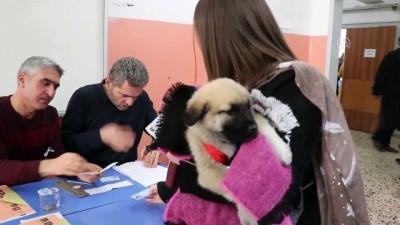 Oyunu yavru köpeği 'Bücür' ile kullandı - ELAZIĞ