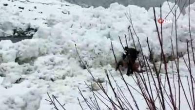 cig dusmesi -  Şırnak'ta çığ düştü, vatandaşlar tehlikeye aldırış etmeden balık topladı