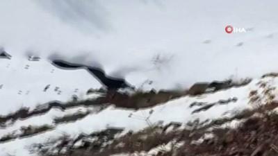 Karlı alanda tek kalan kurt, vatandaş kamerasına yansıdı