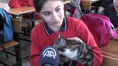 Sokak kedileri okulun maskotu oldu - ADIYAMAN