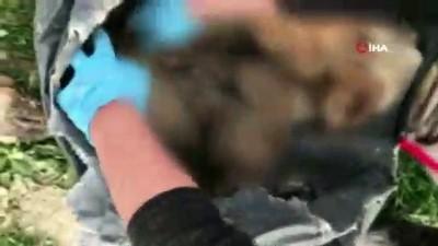 Burdur'da hayvan katliamı iddiasıyla ilgili 4 kişi hakkında soruşturma başlattı.