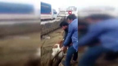Bataklık faciasında acı detay...Çukura daha önce bir ineğin saplandığı ve vatandaşlar tarafından kurtarıldığı ortaya çıktı