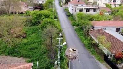 Sazlıbosna Köyünün misafir Leylekleri havadan görüntülendi