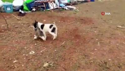 mustakil ev -  Köpek ile kedilerin dostluğu dikkat çekiyor