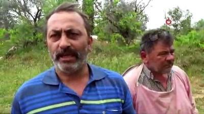 katliam -  Aydın'da arıcılara şok yaşadı...Binlerce kovan arı çırpına çırpına telef oldu