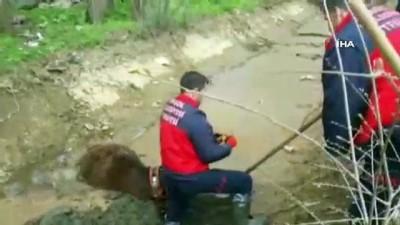 Çamura gömülen ineği itfaiye ekipleri kurtardı